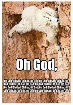 So, there is a goat on the wall, about to fall to its death and your first instinct is to take a picture!?!?!