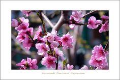 Ode To Joy by Svetlana Suprunova on 500px