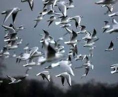 Resultado de imagen para Muchas aves volando en circulos