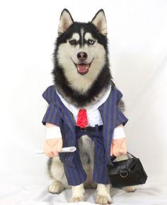Career dog