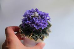 Cheap matthiola incana seed, Buy Quality african violet seeds directly from China violet seeds Suppliers: Mixed Color Mini Violet Seeds,African Violet Seeds,Mini Garden Plants Violet Flowers Perennial Herb Matthiola Incana Seed Perennial Flowering Plants, Herbaceous Perennials, Blooming Plants, Ornamental Plants, Flowers Perennials, Planting Flowers, Flower Plants, Garden Netting, Indoor Plants