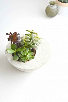 Turn two bowls and some concrete into a beautiful succulent planter.