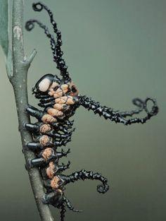 ブラーミン モスの幼虫 : 心臓発作起こしそうなほどアンビリーバボーな生き物たち【グロ注意】 - NAVER まとめ