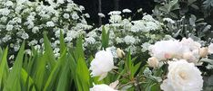 Hear expert planting advice from Chris as he tours you through his inner city garden