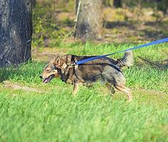 The 3 Most Common Dog Training Problems and How to Fix Them