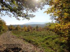Duna-Ipoly Nemzeti Park - piękne lasy w pobliżu Budapesztu - Turkusowa Kropka Lasy, Country Roads, Dune