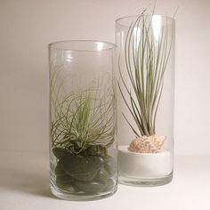 Tillandsia or Air Plant Vases