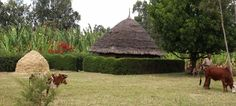 Beautiful Kacha Bira, #ethiopia Help families succeed at www.rootsethiopia.org