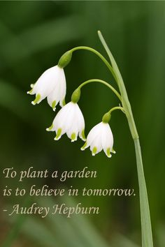 1000 Images About Garden Quotes On Pinterest Gardening Quotes Garden Quotes And Garden Signs