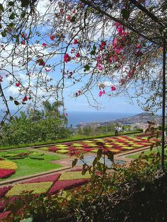 botanical gardens, funchal, madeira http://www.travelandtransitions.com/destinations/destination-advice/europe/madeira-portugal/
