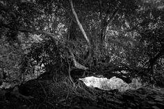 CAMBODIAN TREE. Cambodia 2013