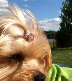 3 Button Bling Top Knot Tamers for your Dog s by crazyforcollars e1e4eb840