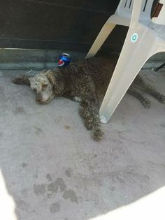 LA PUENTE, CA - FOUND DOG: Found HIM last night and no collar. Near La Puente high school and park. Ask for Adriana  626 485 4398 Cross-post from Craigslist. Please contact poster: http://losangeles.craigslist.org/sgv/laf/4497739837.html