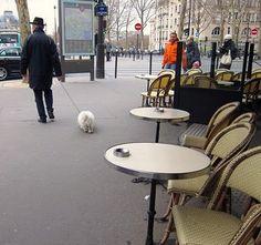 Paris Dogs Rule