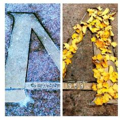 The M in the Diag during winter and fall.