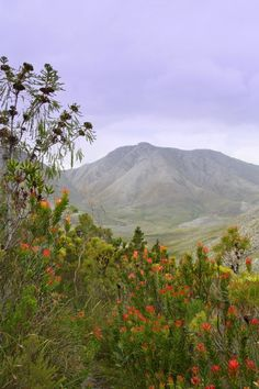 The Kogelberg Nature Reserve Is often considered the heart of the Cape Floral Region. Places Around The World, Around The Worlds, Wonderful Places, Beautiful Places, South Afrika, African Artists, Out Of Africa, Walkabout, Nature Reserve