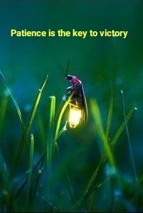 Fireflies or lightning bugs are nocturnal beetles comprising the family Lampyridae. There are about extant species of firefly. All Nature, Amazing Nature, Science Nature, Beautiful Bugs, Beautiful World, Simply Beautiful, Beautiful Disaster, Beautiful Creatures, Animals Beautiful
