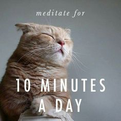 Note to self: Get back to meditating as part of my wellness routine so I can quit medicating!