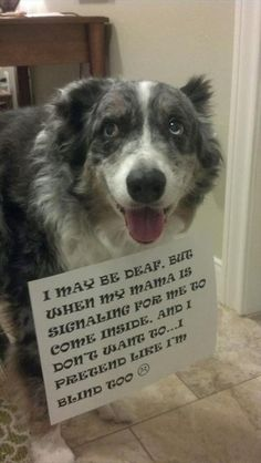 Dog Shaming features the most hilarious, most shameful, and never-before-seen doggie misdeeds. Join us by sharing in the shaming and laughing as Dog Shaming reminds us that unconditional love goes both ways. Funny Animal Pictures, Cute Funny Animals, Funny Cute, Dog Pictures, Funny Dogs, Hilarious, Happy Pictures, I Love Dogs, Puppy Love