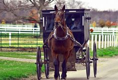 10 Frugal Lessons from the Amish. Amish horse and buggy Amish Pie, Amish House, Amish Community, Horse And Buggy, Money Saving Mom, Amish Country, Country Life, Amish Farm, American Country