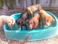 Crowded pool!