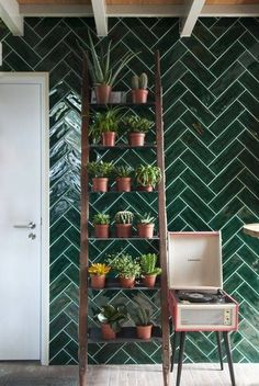 Smaragd tiles and plant collection displayed on an old ladder