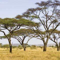 Great Parks of Kenya