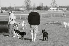 The #Dog Park is More than a Place to Socialize Our Dogs