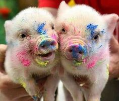 Animal Photos That Will Make You Smile #adorable #funny #cute #baby #animal #photography #lol    and here is the article on the cute little piggies - http://www.dailymail.co.uk/news/article-459901/Pigasso-The-little-oinks-making-splash-art-world.html