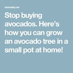 Stop buying avocados. Here's how you can grow an avocado tree in a small pot at home!