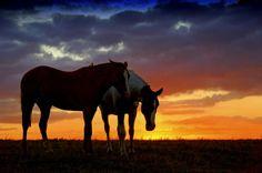Haraganeando horses, Pelotas Brazil Rio Grand do sul South America