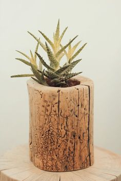 Hollow out a log and turn it into a succulent planter.