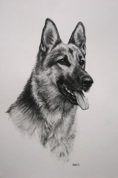German Shepherd Alsation dog art fine art Limited by Terrierzs