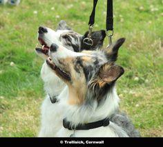 Dog Friendly Trelissick Gardens, Cornwall