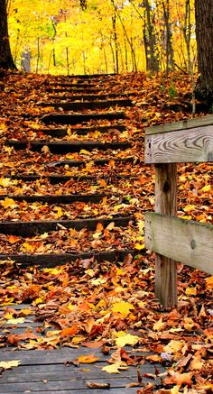 There's just something about fall leaves and old wood that I love. ~ Cherie