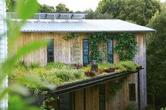 How an Auckland soil scientist's inner-city living roof flourishes without soil Storm Water Drain, Mushroom Compost, Roof Edge, Suburban House, Living Roofs, Growing Mushrooms, Rain Garden, Planting, Gardening