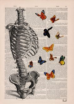 Human Skeleton Torso full of butterflies. #Anatomy