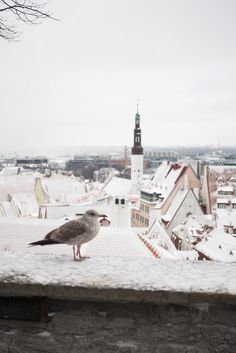 Talvimatka Tallinnaan – mitä tehdä ja missä yöpyä?
