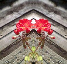 #flowers #susanesphoto #mirrorphoto