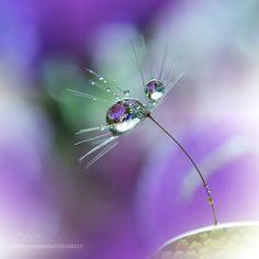'O'o' by Juliana_Nan #nature #photooftheday #amazing #picoftheday