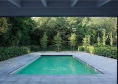 The view from the house: a swimming pool surrounded by bluestone pavers and layers of green texture.