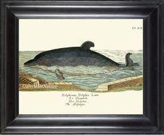 Whale Art Print 11 4x6 5x7 8x10 11x14 Beautiful Large Antique