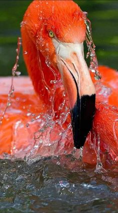 New wall paper ipad nature water 51 Ideas Exotic Birds, Colorful Birds, Beautiful Birds, Animals Beautiful, Beautiful Wall, Animals And Pets, Cute Animals, Flamingo Pictures, Afrique Art