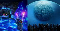 This Astounding and Completely Fish-Free Aquarium Changes Everything - At National Geographic's new aquarium now open in Times Square, you can swim with whales and dolphins, explore coral reefs while the fish inhabitants dart out of your way, and even play with a seal. And the best part is that no animals are held captive or harmed.