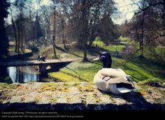 Foto 'warten auf den Frühling' von 'birdys'