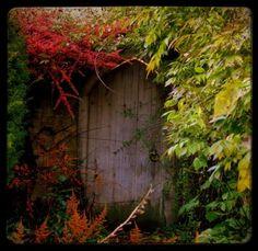 Woodland Photo Print - The Secret Garden - Fairy Tale Fine Art Photograph
