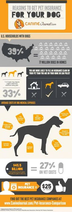 Pet Insurance Comparison 2014: Are You Ready For a Vet Emergency?