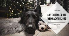 LokisLife   Hundeblog LokisLife   Hundeblog - Ein deutschsprachiger Blog über das Leben mit einem Hund aus dem Auslandstierschutz. Leser finden hier unter anderem DIYs, Literaturtipps, Produkttests, Empfehlungen und Tipps zur Hundeerziehung. Weihnachten in diesem Jahr wird anders als sonst, aber wie genau verbringen Loki und ich unser Weihnachtsfest? Das lest ihr hier. Der Beitrag Blogparade: Wie verbringe ich Weihnachten mit meinem Hund? erschien zuerst auf LokisLife   Hundeblog. Loki, Husky, Animals, Dog Training Tips, Secret Santa, Animal Welfare, Life, Christmas, Animales