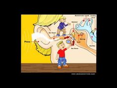 Unit 6: Learn About the Ear