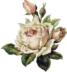Vintage Rose Graphics | Paper Crafts – Vintage Pieces for Collage/Altered Art | Ammey's Art ...